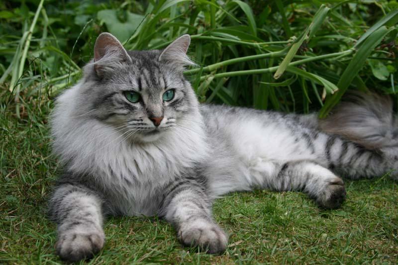 Cats Warriors Grey Tabby With Orange Kittens